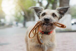 Dogs Pet